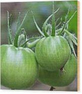 Green Tomatoes Wood Print