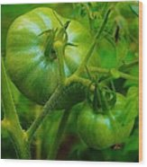Green Tomatos Wood Print