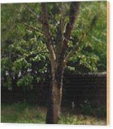 Green Tree In Park Wood Print
