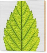 Green Tree Leaf Wood Print