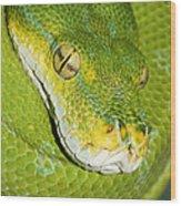Green Tree Python #2 Wood Print
