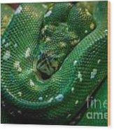 Green Tree Python Curled Wood Print