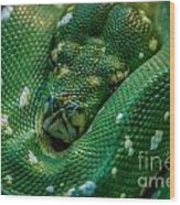 green tree python Macro Wood Print