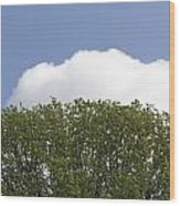 Green Tree Stands Out Against The Blue Sky Wood Print