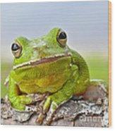 Green Treefrog Wood Print