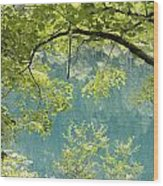 Green Trees Over Blue Water Wood Print