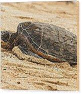 Green Turtle 3 Wood Print