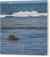 Green Turtle Surf Wood Print