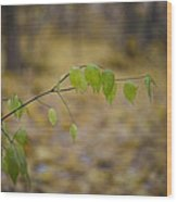 Green Twig Wood Print