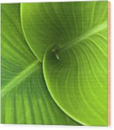 Green Twin Leaves Wood Print