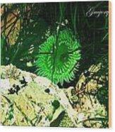 Green Urchin Wood Print