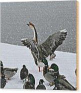Green Valley Ducks Wood Print