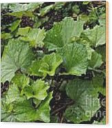 Green Vine Wood Print