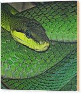 Green Viper Wood Print