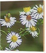 Green Wasp And Daisies Wood Print
