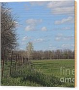Green Wheat Field With Blue Sky Wood Print
