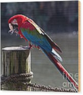 Green-winged Macaw Wood Print