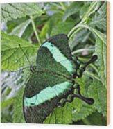 Green Wings 2 Wood Print