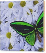 Green Wings In The Mums Wood Print