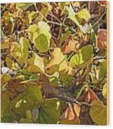 Green Yellow And Dry Leaves Wood Print
