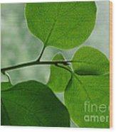 Green Zen Wood Print