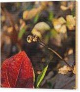 Greenbriar Leaf And Wintergreen Seedpod Wood Print