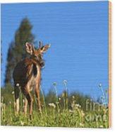 Greener Fields Wood Print