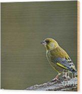 Greenfinch Wood Print