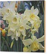 Greenhouse Daffodils Wood Print