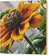 Greenhouse Daisy Wood Print