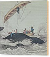 Greenland Whale Book Illustration Engraved By William Home Lizars  Wood Print