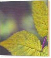 Greenleaf Wood Print