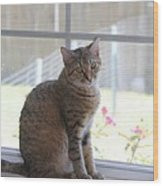 Gretchen Sitting In The Window Wood Print