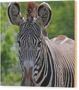 Grevy Zebra Wood Print