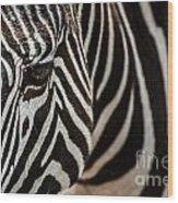 Grevy's Zebra 4 Wood Print
