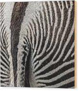 Grevy's Zebra 5 Wood Print