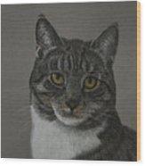 Grey Cat Wood Print