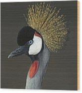 Grey Crowned Crane Portrait Wood Print
