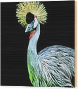 Grey Crowned Crane Wood Print