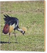 Grey Crowned Crane. The National Bird Of Uganda Wood Print