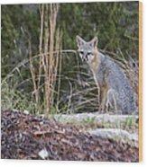 Grey Fox At Rest Wood Print
