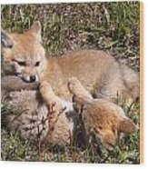 Grey Fox Kitts At Play Wood Print