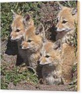 Grey Foxes At Den Wood Print