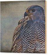 Grey Hawk Wood Print