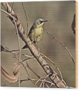 Grey- Headed Honeyeater Wood Print