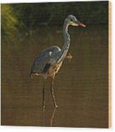 Grey Heron In Brown Water Wood Print