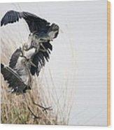 Grey Herons Fighting Wood Print