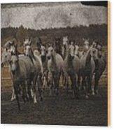 Grey Horses Wood Print