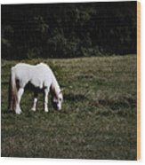 Grey In The Pasture Wood Print