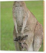 Grey Kangaroo And Joey  Wood Print